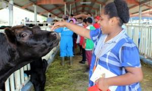 SAI-sekolah anak indonesia-sekolah anak papua_sekolah papua_anak papua